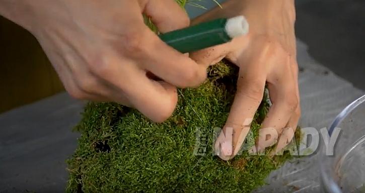 Kokedama z asparágusu: ovažte drátkem a provázkem