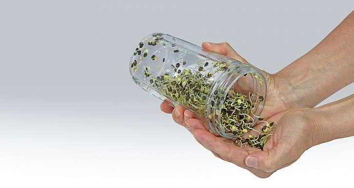 Naklíčená semena ve sklenici