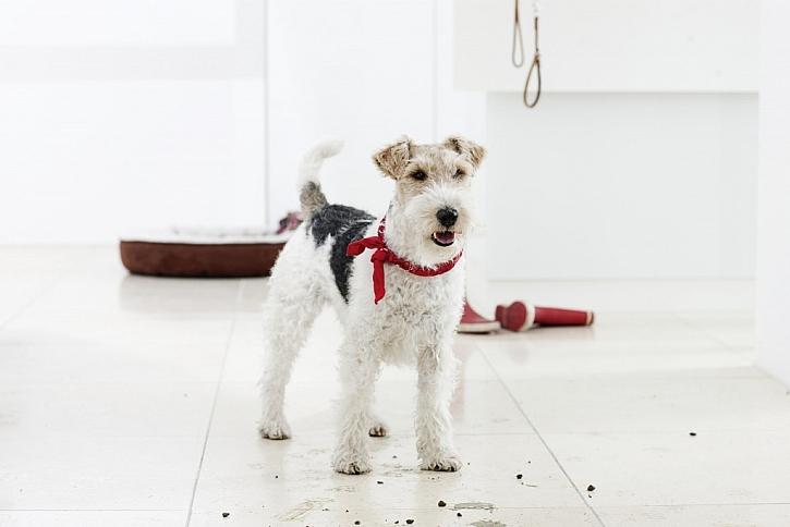 Kočka nebo pes v bytě? Žádný problém s úklidem! Úklid po domácím mazlíčkovi s Kärcher je hračka!