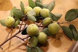 Tomel, exotický stromek, který plodí oblíbené ovoce kaki