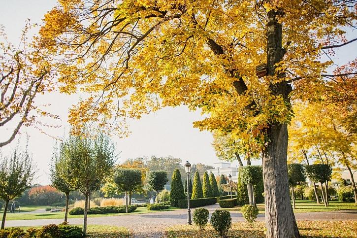 Před výsadbou zvažte, jaké druhy stromů se hodí za vaší zahrady