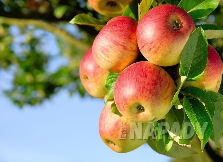 Jablek bychom si měli dopřát co nejvíce, třeba i ve formě domácího jablečného moštu (Zdroj: Depositphotos.com)