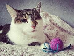 Jak uplstit kuličku: Potěšte svou kočku hračkou s omamnou vůní