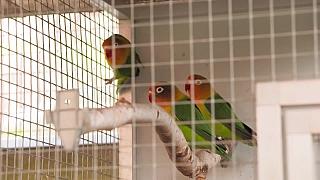 Připravte papouškům letní voliéru