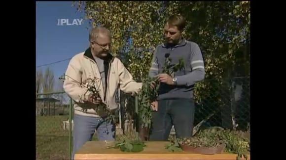 Kompostování plevele