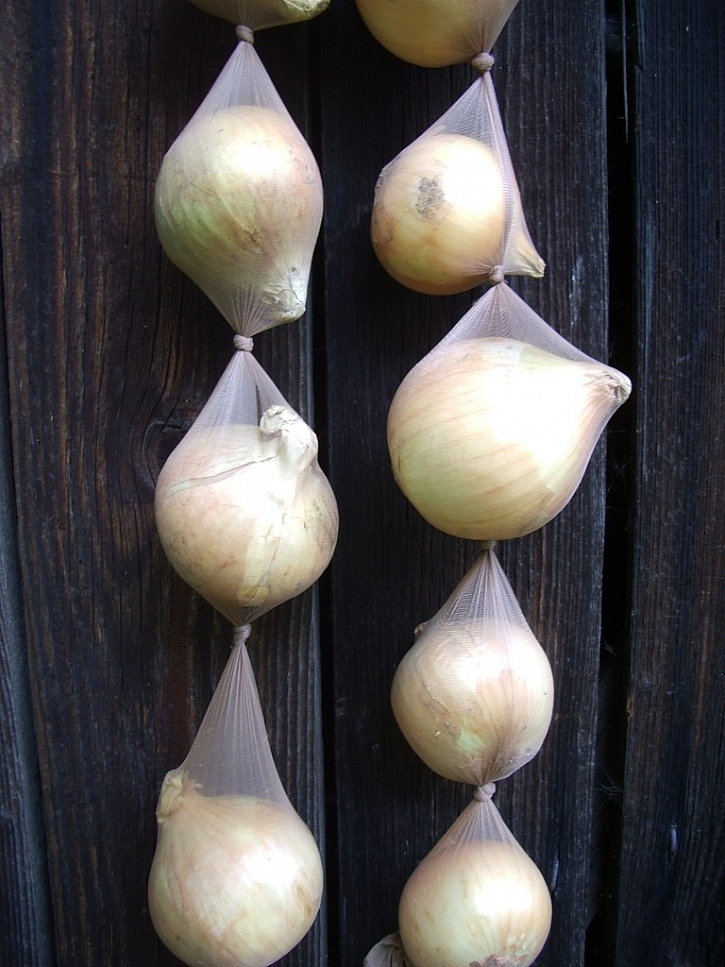 Cibule je nejlépe uskladněná v závěsu třeba v copu