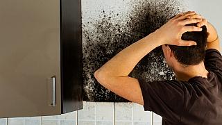 8 tipů, jak se zbavit plísně v bytě: Nejdůležitější je minimalizovat vlhkost!