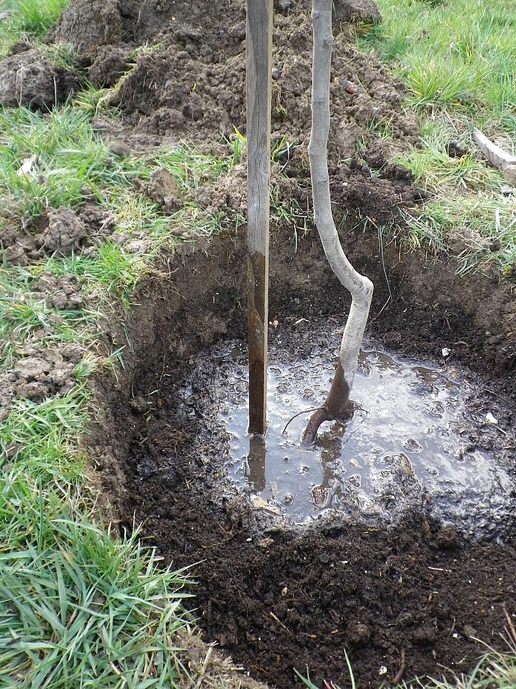 Důkladné zalití