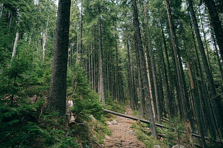 Kůrovcová kalamita a palivové dřevo