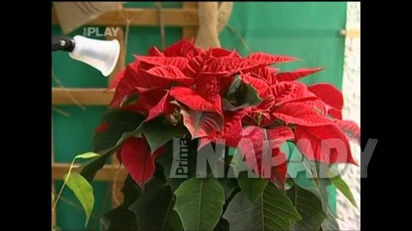 Škůdci na pokojových rostlinách