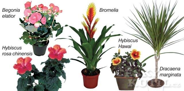 Rostliny do bytu