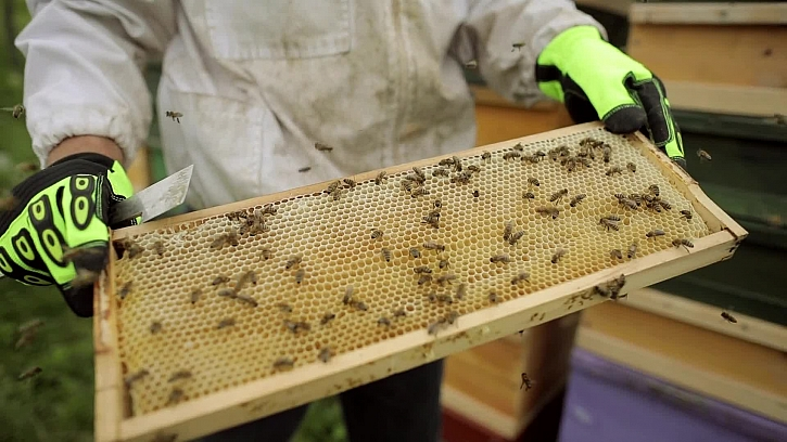 Základy včelařství