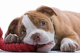 9 pravidel jak ze štěněte vychovat šikovného psa 1. díl