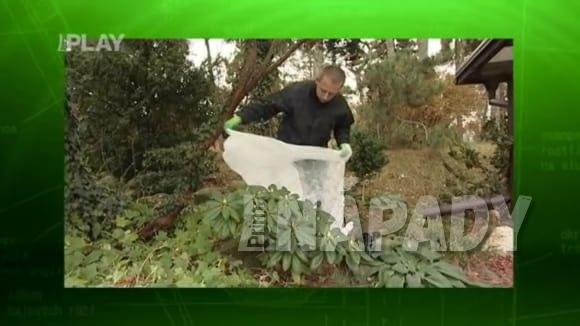 Ochrana rostlin před mrazy