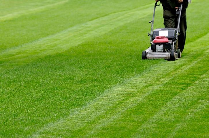 S prvním sečením nezapomeneme na přihnojení, aby trávník zesílil