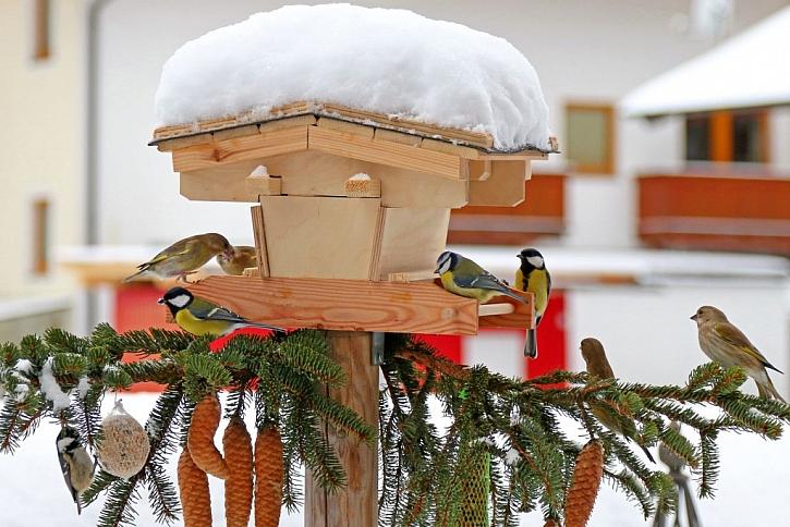 Přikrmování ptactva