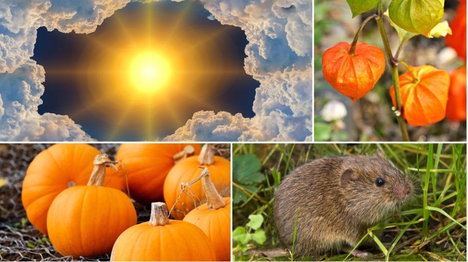 Předpověď počasí na poslední víkend v září: Co dělat na podzimní zahradě