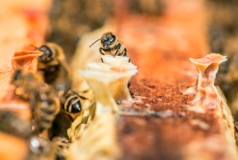 Péče o včely, která čeká na včelaře s příchodem jara