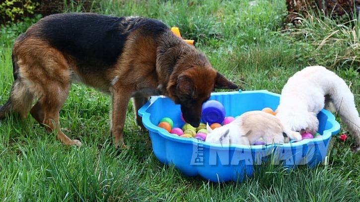 Psi si zaslouží tu nejlepší péči: určitá psí plemena inklinují k určitým chorobám