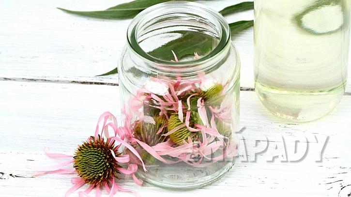 Echinacea: domácí extrakt i tinktura se připravují z květů nebo kořenů
