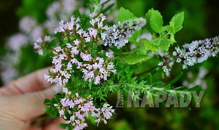Domácí bylinkový olej na vaření: použijte čerstvé byliny i zeleninové natě, které máte právě k dispozici