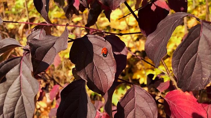Víte jak můžete použít shrabané listí pro výrobu přírodního hnojiva?