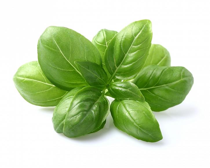 Bazalka je velmi oblíbená a aromatická bylinka (Zdroj: Depositphotos)