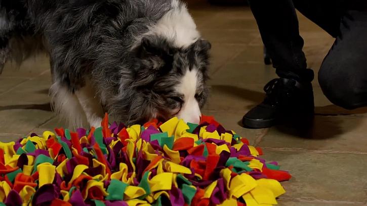 Jak si jednoduše vyrobit hračky pro naše psí mazlíčky