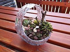 Nemáte zahradu? Vytvořte si domácí minizahrádku v misce!