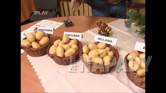 Jaké brambory použít na salát