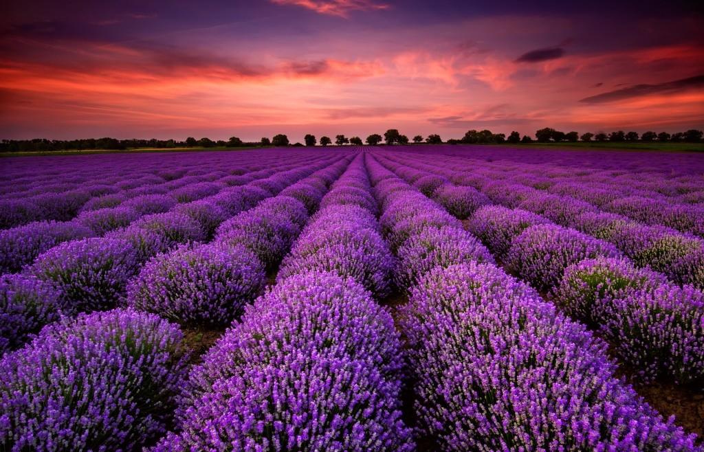 Jak voní Provence?