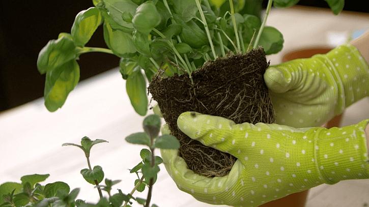 Jak šikovně označit květináče s bylinkami: Už nikdy se nemůžete splést 1