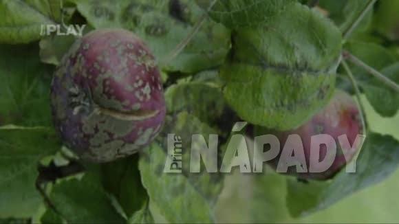 Ochrana proti škůdcům na jabloních
