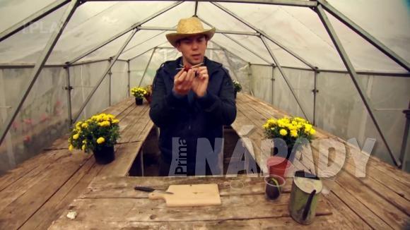 Jak si vypěstovat avokádo (hruškovec přelahodný)