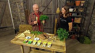 Víte jak správně pěstovat petržel a jak předejít nemocem?