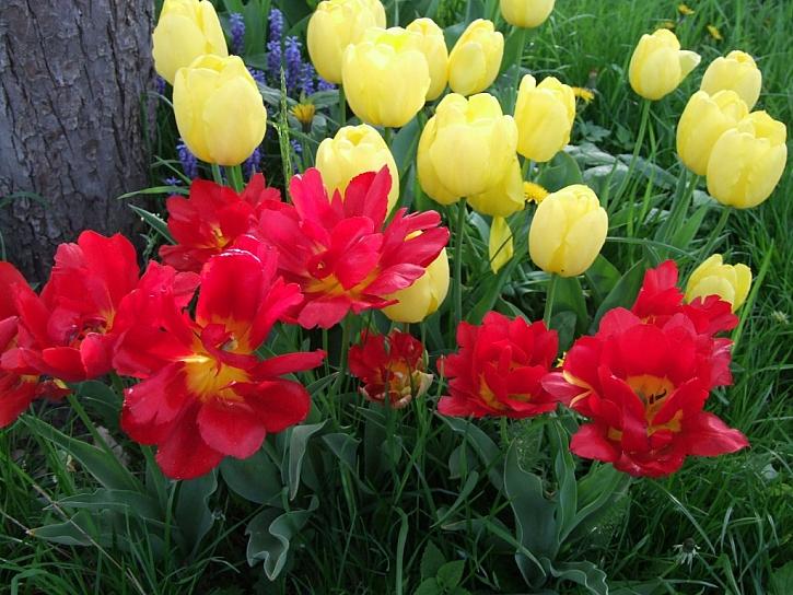 Pozvánka na jarní výstavu květin do Kroměříže