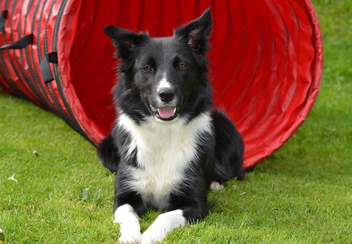 Báječný sport pro voříšky i psí šampiony: Agility, sport pro aktivní psy