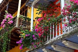 Jak na jaře pečovat o balkónové rostliny?
