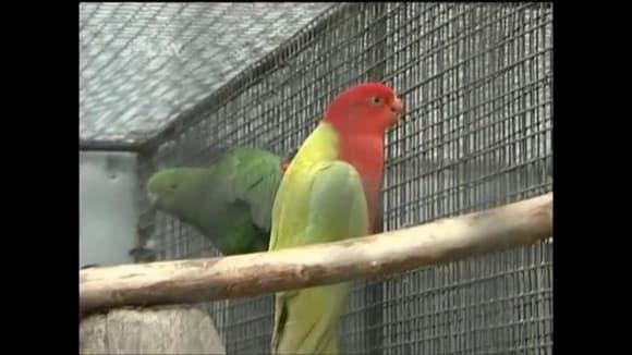 Chov papoušků