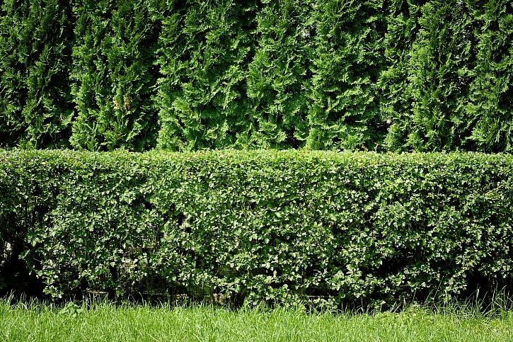 Dvojitý živý plot