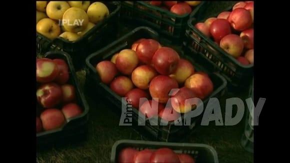 Jak připravit jabloně pro bohatou sklizeň