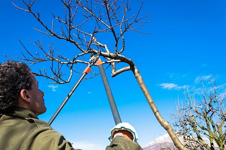 Průklest ovocných stromů se až na výjimky provádí mimo vegetační dobu