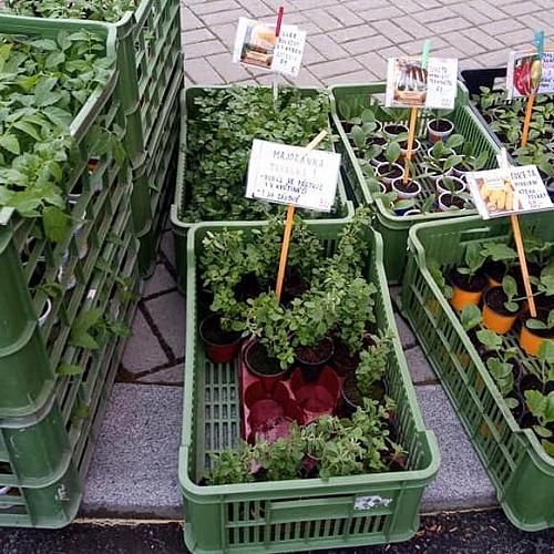 Farmářské trhy Příbram