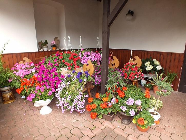 Barevné květy pro radost