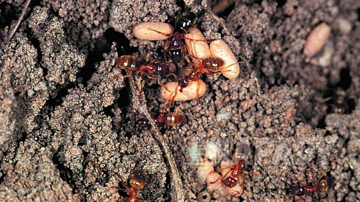 Jaro na zahradě je radost, ale mravenci už dovedou pěkně potrápit