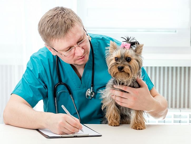 Pes, veterinář