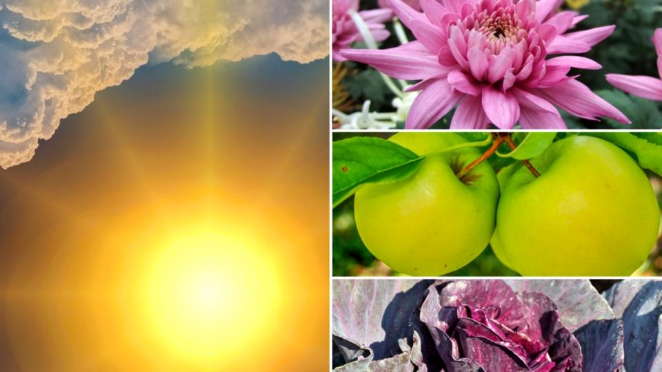 Předpověď počasí na první říjnový víkend: Co dělat na zahradě? Sklidit úrodu!