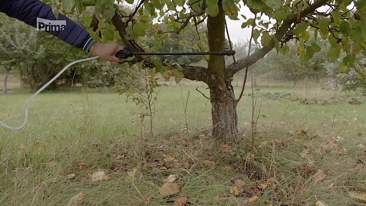 Jak odradit obaleče jablečného od našich ovocných stromů a vyhnat škůdce od pokojovek? (Zdroj: Ochrana před škůdci rostlin i stromů)