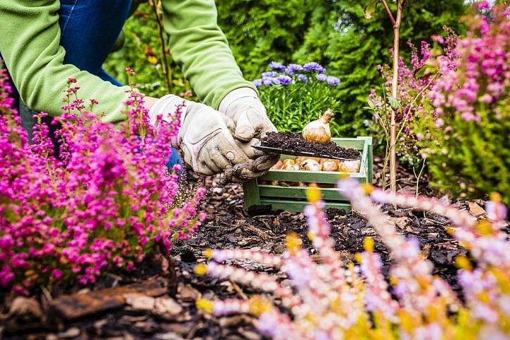 Ukliďte ze zahrady všechny plodiny a zazimujte květiny