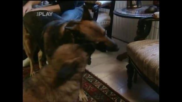 Jak vybrat krmivo pro psy